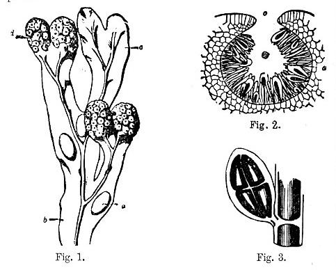 Algae images