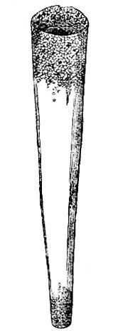 Pectinaria belgica tube image