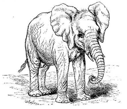 Elephant Body Parts Name http://www.1902encyclopedia.com/E/ELE/elephant.html