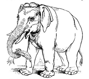 الفيل asian-elephant-fig2.jpg