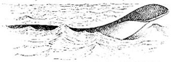Sea Serpent H. M. S. Daedulus image